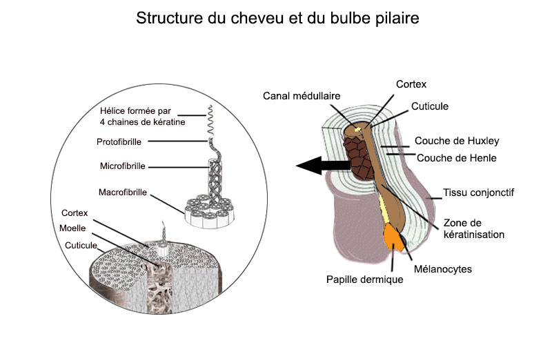 structure-cheveux-pilou-pilou