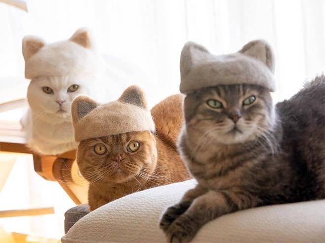 Des petits chapeaux pour vos chats faits… avec leurs poils !