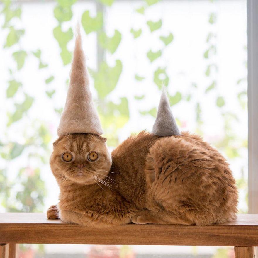 chapeau-chat-pilou-pilou-04