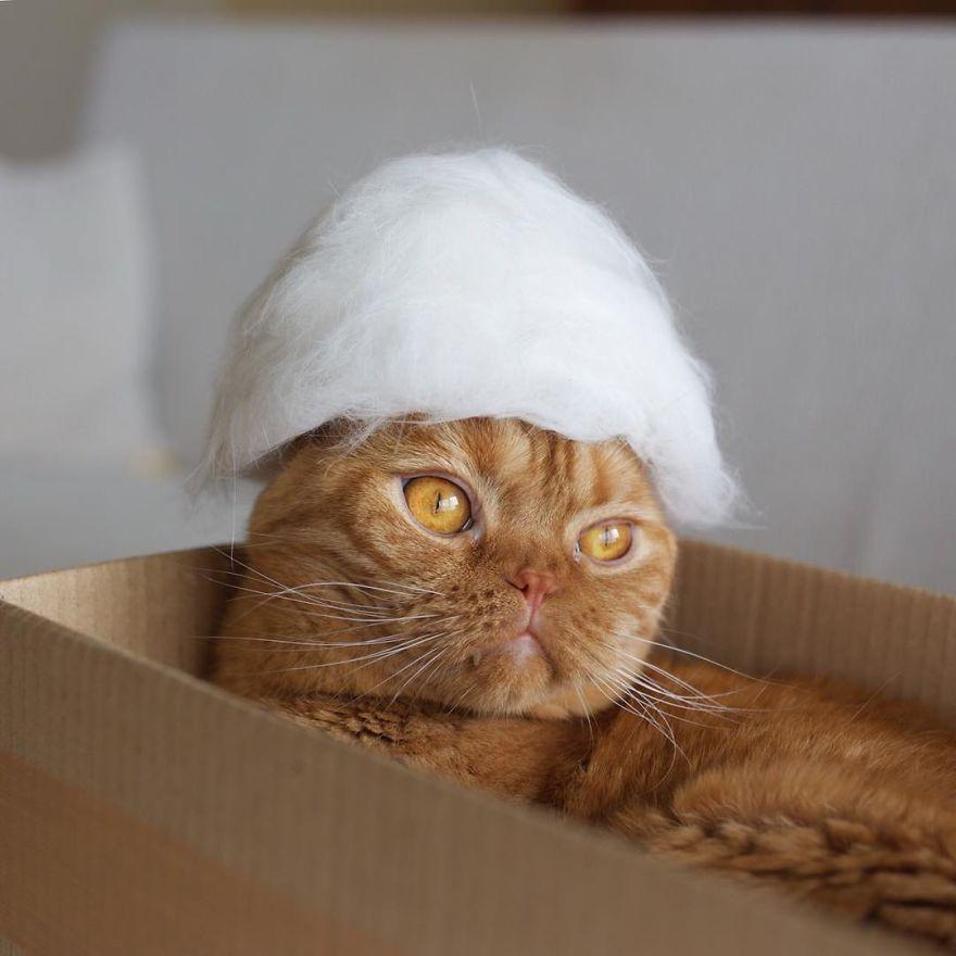 chapeau-chats-pilou-pilou